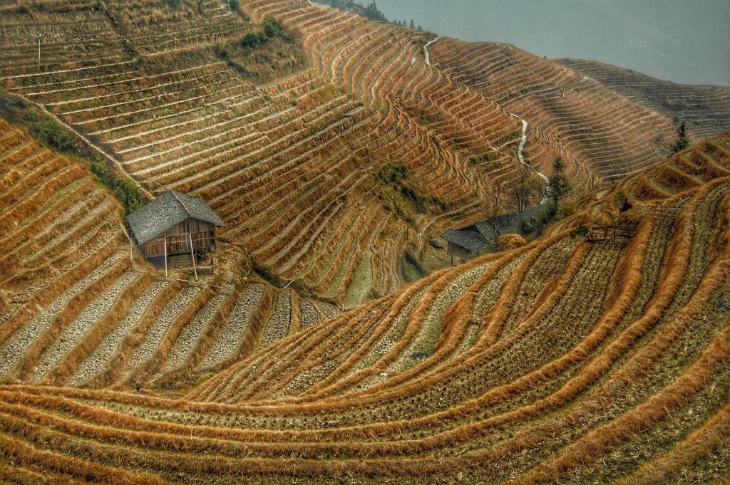 La culture en terrasse des rizières chinoises - © shy sol