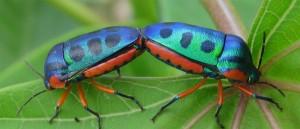 Le Mozambique abrite des insectes très colorés - © Ton Rulkens
