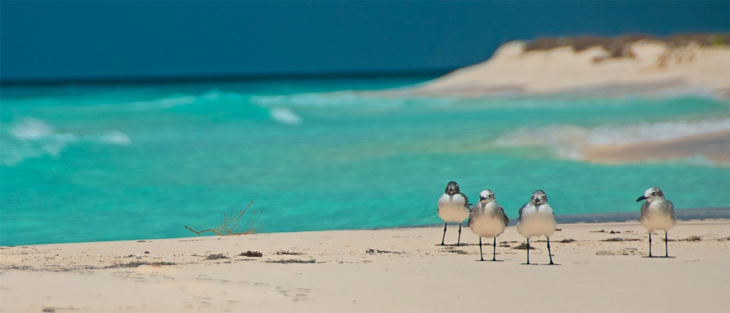 Des oiseaux profitent d'une des plages de Los Roques - © Emiliano Ricci