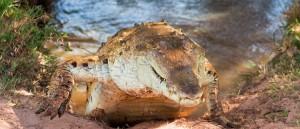 L'Orénoque abrite quelques jolies créatures - © Fernando Flores