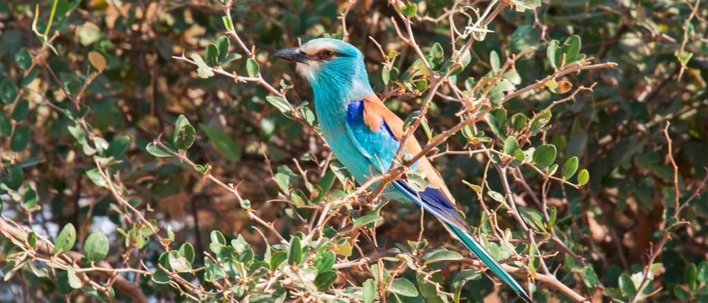 Le Sénégal, un paradis pour passionnés d'ornithologie - © Olivier LEMETTAIS