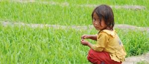 Un enfant Hmong dans une rizière près de Lai Chau, Vietnam - © Damien Dempsey