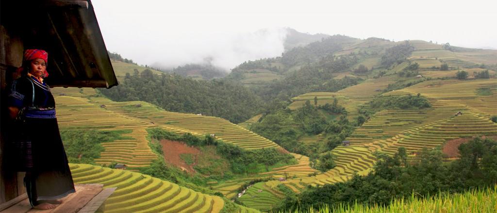 Une femme Hmong surplombe ses rizières, Le Pan Tan, Vietnam - © ebiggs vancouver
