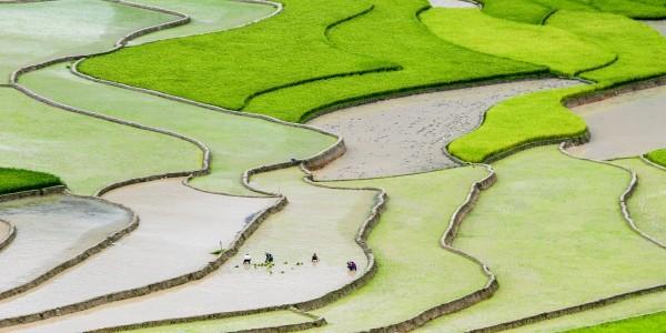 Les magnifiques rizières de Mu Cang Chai, Vietnam - © Nguyen Anh Tuan