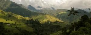 Dans la Vallée de Cocora, Colombie - © Axel Rouvin