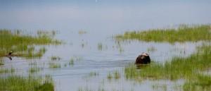 Découvrez la faune du lac Nakuru, Kenya - © Stevan Nicholas