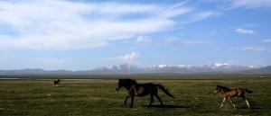 Près du lac Son Koul, Kirghizistan - © Mr Hicks46
