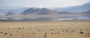 Le lac Terkhiin, Mongolie - © travelmag.com
