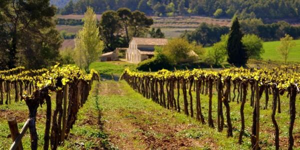 Vignes à Majorque - © Angela Llop
