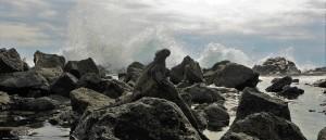 Un iguane marin de prélasse sous les embruns