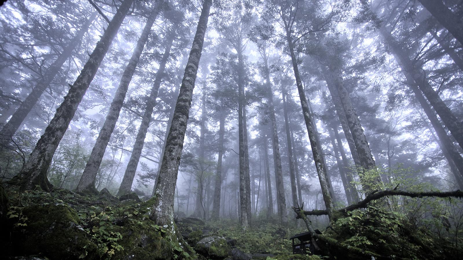 Au cœur de la forêt vierge de Shennongjia, au Hubei, en Chine - © Evilbish